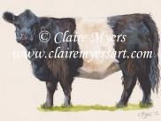 Beltie Card
