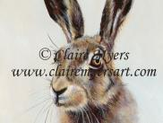 Brown Hare Card